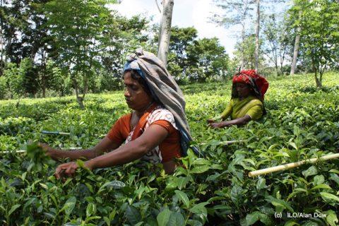 Sri Lanka_Tea plantation_(c) ILO-Alan Dow